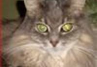 kittydoc