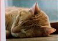 gremlin avatar