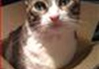 iheartmycats94