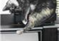 LyP avatar