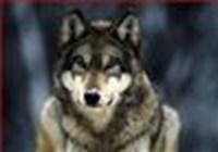 Rex911 avatar