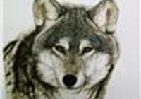 Wolf7714