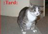 kittykat14311