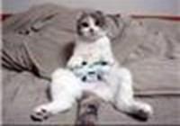 KittyGamer
