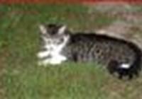 CatsMakeMeHappy
