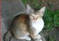 felinesopher
