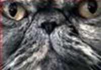 dark_saphir avatar