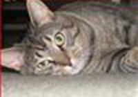 kittyking421